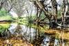 Darraweit Guim 2017-11-29 (5D_32A5112) (ajhaysom) Tags: darraweitguim nisicpl nisisoftgrad creek canoneos5dmkiii canon1635l australia