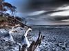 Am Darßer Weststrand (alterahorn) Tags: beach windflüchter strand meer balticsea ahrenshoop fischland ostsee rehberge dars
