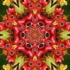 Kaleido Abstract 1686 (Lostash) Tags: art photography edited kaleidoscopes patterns shapes symmetry