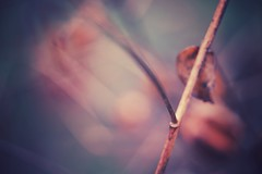 miller's crossing (christian mu) Tags: nature bokeh flowers autumn germany muenster münster botanicalgarden botanischergarten schlossgarten christianmu sonya7ii sony 9028g 9028 90mm