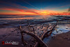 Sunrise Crossing (andrewslaterphoto) Tags: andrewslaterphotography beach branch clouds cudahy discoverwisconsin greatlakes lakemichigan landscape longexposure milwaukee nature outdoors sand sheridan stones sunrise travelwisconsin trees water canon 5dmarkiii wisconsin unitedstates us