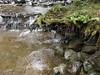 Tasi-132 moss  and ferns (spelio) Tags: australian tasmania tasi tassie tassi scenic views