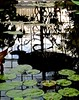 Conservatory of Flowers, Golden Gate Park, water lilies, roof window reflections, (David McSpadden) Tags: conservatoryofflowers goldengatepark roofwindowreflections waterlilies