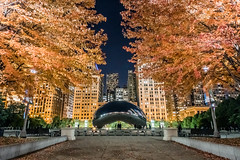 Autumn in Chicago (Joshua Mellin) Tags: fallfoliage autumn fall autumninchicago fallinchicago foliage tree trees colors red millenniumpark chicago weather season seasons downtown park ad advertising tourism travel guide green city buildings skyscrapers cloudgate thebean bean beanchicago facebook groups invites events event night evening dusk sunset magazine high quality image picture pictures photo photos best flights explore inexplore flickrexplore chitown millennium joshuamellin photographer joshua mellin journalist pics photography bestphotographer joshuamellincom blogger writer iconic