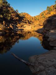 mutawintji - mutawintji gorge - 1343 (liam.jon_d) Tags: nsw australia australian billdoyle bynango bynangorange bynguano bynguanorange inland landscape mootwingee mootwingeenationalpark mutawintji mutawintjigorge mutawintjinationalpark nationalpark nationalparksandwildlife newsouthwales outback outbacknewsouthwales outbacknsw reserve west western westernnewsouthwales westernnsw popularimset pickmeset