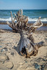 Driftwood (Go See Do Photos) Tags: whitefishpoint lakesuperior upperpeninsula michigan greatlakes beach driftwood