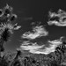 Blue Skies with Wisps of Clouds Above the Sonora Desert (Black & White)