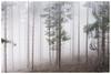 im Nebel (Velaeda) Tags: austria bäume carinthia fog knappenberg kärnten nebel wald nature trees