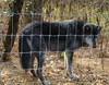IMG_1284 (goaniwhere) Tags: wolf animal wolves wildanimal sanctuary