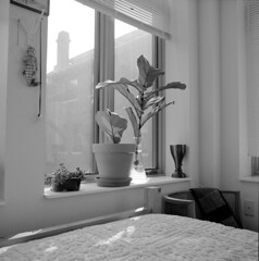 untitled (kaumpphoto) Tags: mamiya 120 ilford interior room plant bed chenille monochrome bw corner blinds window fig