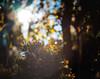 ILCE-7M2-03354-20171117-1515-Pano // Konica Hexanon AR 100mm 1:2.8 (Otattemita) Tags: 100mmf28 bokehpanorama bokehrama brenizermethod florafauna hexanon konica konicahexanonar100mmf28lateversion fauna flora flower nature plant wildlife konicahexanonar100mm128 sony sonyilce7m2 ilce7m2 100mm cnaturalbnatural ota