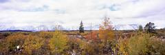 Autumn at the Tetons (rpantaleo) Tags: panorama fujica g617 film grandtetonnationalpark wyoming unitedstates