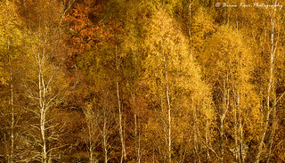 Glen Cannich Autumn