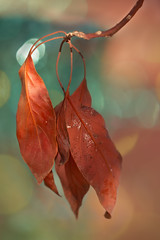 November (Zara Calista) Tags: leaves dry bokeh colorful fall autumn november california leaf nikon