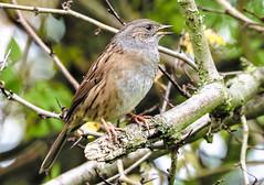 chirp up (I was blind now I see!) Tags: bird birding birds birdphotography birdwatching chirp sing chirping singing beautiful beauty nature