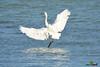 A-LUR_2026 (OrNeSsInA) Tags: trasimeno uccelli bird natura italia umbria castiglionedellago ornessina lucarosi nikon tamron byrd lago chiusi siena perugia aironi cormorani