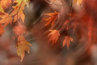 323/365....Autumn. A Slider.