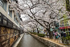 Sakura-Kiyamachi-Kioto-8 (luisete) Tags: hanami japan japón cerezosenflor kiyamachi kioto kyoto sakura