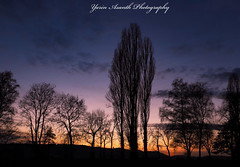 So far and yet so close (Yarin Asanth) Tags: germany radolfzell mettnau distance friendship romantic trees black silhouette surface yellow red water lake atmosphere sunset sundown afterglow lakeconstance yarinasanth gerdkozik yarinasanthphotography gerdkozikphotography gerdkozikfotografie gerdmichaelkozik