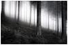 . (Velaeda) Tags: carinthia fog knappenberg kärnten wald forest nature trees