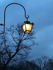 Wieczorny spacer / evening walk im Warsaw (basiamarcisz) Tags: warsaw warszawa łazienkikrólewskie november trees światło niebo wieczór evening sky lampa light lamp