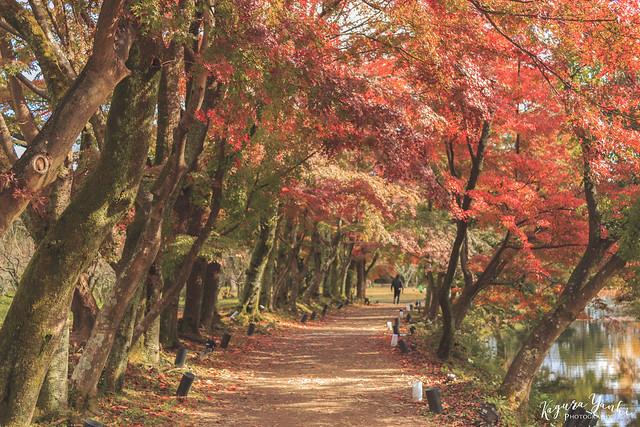 関西ハイキングのおすすめスポット27選|必需品5選
