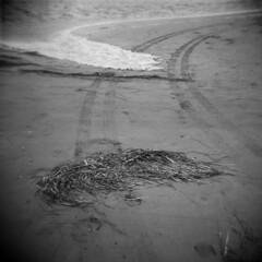 North Rustico Harbour #12 (LowerDarnley) Tags: holga pei princeedwardisland northrusticoharbour ocean beach tiretracks seaweed seafoam atlanticcanada maritimes