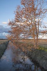 El rec i l'arbre (ouyea...) Tags: arrossar baixempordà paisatge landscape xt2 fujifilmxt2 fujinon1855 fujifilm