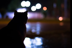 Viendo la lluvia.. 🐱 (pablofelcaro1) Tags: nikon d7100 50mm18 nikkor50mm nikontop nikonphotographers photography photographer cats cat gato lluvia night noche dzoom blogdelfotógrafo argentina fotografosargentinos booked