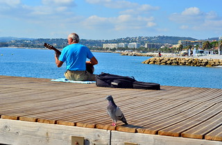The music lover pigeon