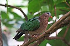 IMG_0893 (jaybluejeans94) Tags: animal animals nature chester zoo chesterzoo bird birds