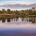 L'étang David