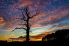 Just after 4 (Fin Wright) Tags: ian wright 2017 blip finwrightphotographycouk ianwright fin ellesmere shropshire sunset sky drama tree dead can eos 6d 24105 croes croesmere pink sun set