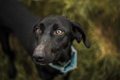 Crazy Bonnie (Paul`s dog photography) Tags: canon eos 5d mark iv ef50mm f18 stm