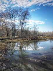 Reflect Reflection Water Tranquil Scene Tranquility Lake Bare Tree Nature Tree Outdoors Sky Scenics Beauty In Nature No People Cloud - Sky Day Landscape Marsh (mikedunnit) Tags: reflection water tranquilscene tranquility lake baretree nature tree outdoors sky scenics beautyinnature nopeople cloudsky day landscape marsh