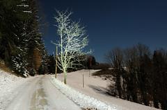 STYRIAN MOONLIGHT/MOONNIGHT (WHITE TREE) (LitterART) Tags: night nacht nightshot winter steiermark österreich mondlicht moonlight tree bauim white schnee