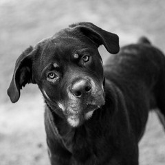 Ramona03Dec201728-Edit.jpg (fredstrobel) Tags: dogs pawsatanta phototype atlanta blackandwhite usa animals ga pets places pawsdogs decatur georgia unitedstates us