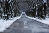 road to nowhere (Fotos aus OWL) Tags: senne winter strase allee landschaft landscape nature natur kopfsteinpflaster ostwestfalen