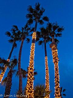 Malibu Lights