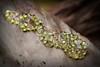 Gaudy Leaf Frog Eggs