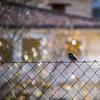Quan la llibertat es vist de groc (Pilonga) Tags: llibertat presó política pardalet cerca llumenetes esperança 349