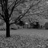 L'automne... en novembre (Argentique) / Autumn in november (Film) (Pentax_clic) Tags: rolleiflex perceptol 13 argentique filmnb bw robert warren stlambert quebec novembre 2016 automne fall arbre feuille