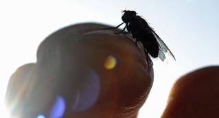 finger fly in the sun