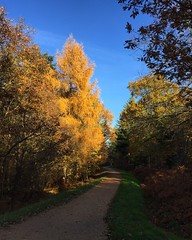 Autumn In The Forest (Marc Sayce) Tags: fall autumn november 2017 alice holt forest hampshire farnham surrey south downs national park