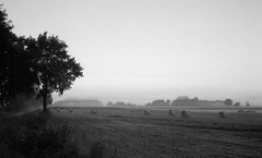 Misty morning (Rosenthal Photography) Tags: morgendämmerung ilfordhp4 asa125 epsonv800 ff135 twiste landschaft bnw bohnste schwarzweiss bw 20171002 olympus35rd analog 35mm landscape nature natur mood stimmung dawn sunrise sonnenaufgang road strase bäume trees feld field olympus olympus35 35rd zuiko 40mm ilford hp4 epson v800 blackandwhite monochrom herbst autumn ilfordfp4 fp4 fp4plus