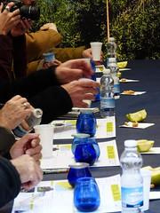 Aceite oliva 2017 (26) (calafellvalo) Tags: aceiteoiloliolivadegustacióntarragonacalafellvalosiuranaarbequina aceite oliva oil oli arbequina olivos aceitunas paamboli panconaceite rostada oroverde hispania tarragona tarraco calafellvalo