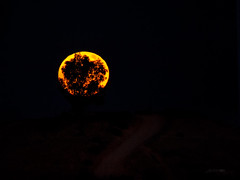 Moonrise and tree (jsanchezqSpotter) Tags: moon moonrise fullmoon tree night moonlight supermoon