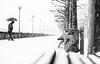 first snow in Düsseldorf (ThorstenKoch) Tags: düsseldorf street streetphotography stadt strasse schatten shadow silhouette schwarzweiss snow schnee chaos pov photography people photographer picture pattern regenschirm umbrella monochrome blackwhite bnw trees outdoor rhein rheinufer rhine germany man walk city candit cold