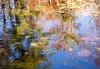 pondering (primemundo) Tags: pond reflections reflectioninwater water trees reflection pondering