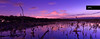 The Wilderness (Artistry & Love) Tags: celestial environment ethereal fineart heavenly land landscape magic mysterious mystical nature pano panorama scene scenery spirit spiritual terrain view vista beachmere dusk birds queensland australia purple blue lake water lagoon laguna reservoir